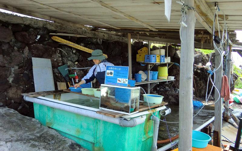 ウニの売店