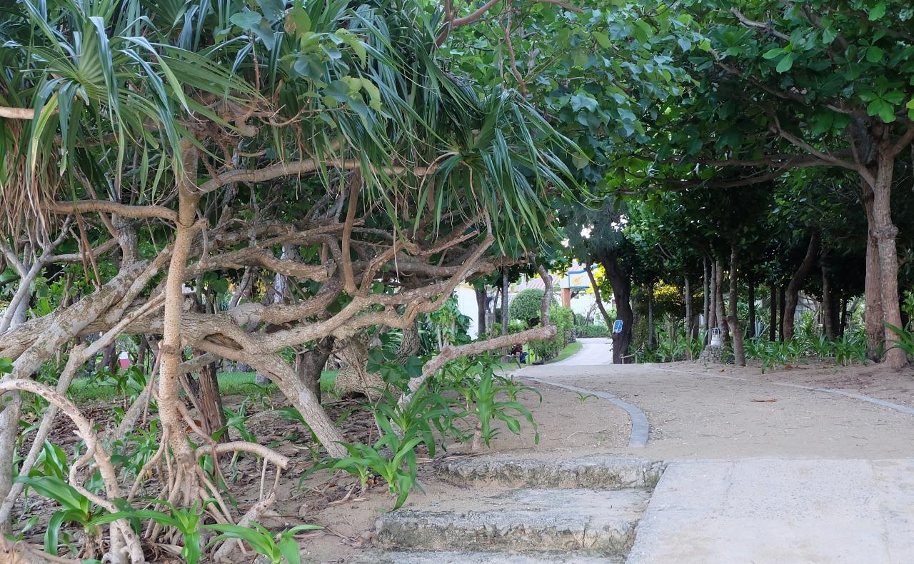 リゾート施設内の木々